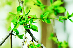 Macro (Yana Grieg) Tags: trees macro tree green nature leaves closeup ukraine lovely crimea