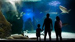 (Charln) Tags: viaje lanzarote acuario