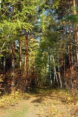 DSC_6012 (Rustam Bikbov) Tags: autumn september 2012    sverdlovskoblast