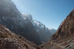 And we start climbing.. (Pooja Pant) Tags: nepal mountains beautiful trek abc annapurna annapurnabasecamp macchapuchre
