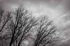 Winter trees (Luca Quadrio) Tags: trees winter sky blackandwhite italy texture clouds river sadness ticino italia dramatic it lombardia lombardy bereguardo