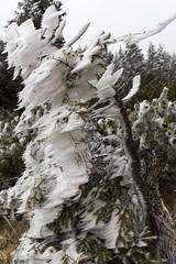 _MG_1008 (schamrock77) Tags: winter italy mountain ice freezing natura inverno montagna friuli ghiaccio galaverna canon6d 35f2is