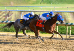 2015-12-19 (6) r4 Trevor McCarthy on #7 Regal Soldier (JLeeFleenor) Tags: photos photography md marylandracing laurelpark marylandhorseracing jockey   jinete  dokej jocheu  jquei okej kilparatsastaja rennreiter fantino    jokey ngi horses thoroughbreds equine equestrian cheval cavalo cavallo cavall caballo pferd paard perd hevonen hest hestur cal kon konj beygir capall ceffyl cuddy yarraman faras alogo soos kuda uma pfeerd koin    hst     ko  maryland