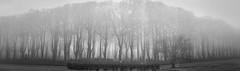 The mist of souls (Eldkvast) Tags: blackandwhite mist tree monochrome cemetery graveyard fog outdoor highkey churchyard trd kalmar dimma kyrkogrd fotosondag fs160207