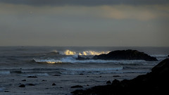 Light in the Dark - 2 of 52 (linlaw39) Tags: sunlight seagulls sunrise dark scotland waves aberdeenshire fraserburgh northeastcoast 52weeksthe2016edition sonydschx90 week22016 weekstartingfridayjanuary82016 9thjan2016 09012016