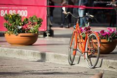bike (Francesca Mannias) Tags: city orange bike calle via bici palermo naranja arancio arancione città lifetravel