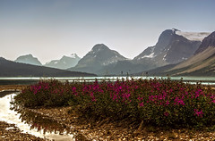 Bow Lake (wimvandemeerendonk, back home) Tags: park flowers blue trees red wild sky cloud mountain lake canada flower color colour reflection nature colors rock clouds contrast river landscape outdoors jasper colours purple bright outdoor scenic glacier alberta valley parkway banff monumental icefield mountainscape bowlake icefieldparkway abigfave wimvandem