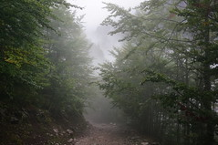 Forest trail (Goran Joka) Tags: wood trees mist plant tree nature fog forest landscape track outdoor path trail foresttrail