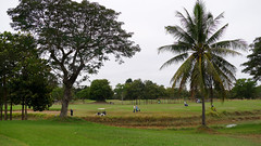 Sri Thani Golf Forest, Udon Thani, Thailand (Gsta Knochenhauer) Tags: tree club forest golf thailand lumix udon january palm course panasonic sri thani 2016 fz1000 p8980106