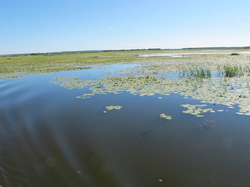 2010 07 08 Polonia - Warmia Masuria - Elblag - Il Canale - Jez Druzno - Lago Druzno - Area protetta_0912