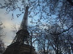 tour Eiffel (HAKUDO) Tags: paris tower rain wind eiffel toureiffel  sakura yesterday ricoh cerisier px