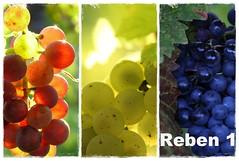 "Reben 1 (Fotokarten bestellen ""klausundtrude@freenet.de"") Tags: collage details trauben fotokarte"