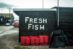 Fresh Fish (Kirsty Ann Photography) Tags: city uk travel sea england fish english beach port photography seaside fishing nikon fresh hastings eastsussex travelphotography fishingport nikond40x