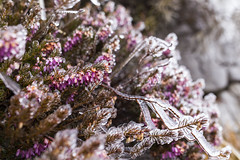 _MG_0983 (schamrock77) Tags: winter italy mountain ice freezing natura inverno montagna friuli ghiaccio galaverna canon6d 35f2is