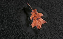 Lone Winter Leaf Framed By Nature (jrussell.1916) Tags: winter ice nature leaf lakes floating textures canonef70200f4lis14tc