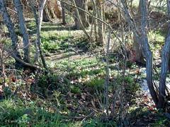 Villarzel-du-Razs (Fontaines de Rome) Tags: aude razs villarzeldurazs villazel