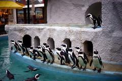 DSC01113c2 (haru__q) Tags: penguin ar sony konica a7  hexanon