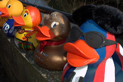 Dressed up ducks for the Ramsbottom Ruck Race 2016 - 8 (Tony Worrall Foto) Tags: county uk england game silly race fun duck costume cool stream tour open place northwest display unitedkingdom many painted country north group ducks competition visit location lancashire plastic area sunlit northern update daft duckrace attraction lancs ramsbottom coolducks welovethenorth