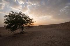 Dubai desert (Wout2.0) Tags: light sunset sky sun tree nikon dubai desert angle wide east middle d800 1835mm