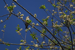 Entre las ramas (Ru GarFer) Tags: parque natural ave rbol pjaro aia guipzcoa gipuzkoa pagoeta txoria