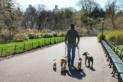 Central Park in all her glory... (kristymartinphotography) Tags: centralpark tcc dogwalker nycparks canonshots nycdogs teamcanon canon70d uploaded:by=flickstagram instagram:venuename=centralpark instagram:venue=12318445 thecreatorclass canonbringit instagram:photo=12234960987949758952013464107