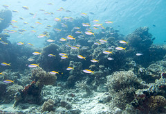 Cliffhanger, Filitheyo - Maldives - Lieux, Filitheyo - Maldives - Site, Maldives - Lieux, Maldives - Site 1656.jpg (hgh68) Tags: site maldives plonge cliffhanger lieux filitheyo