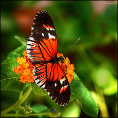 (2253) Papallona (QuimG) Tags: naturaleza macro nature natura panasonic mariposa papallona specialtouch quimg quimgranell joaquimgranell afcastell obresdart