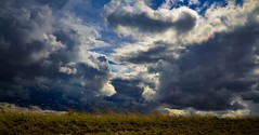 The Gathering (Nutzy402) Tags: blue sky nature grass clouds nikon nebraska cloudy country rainy prairie
