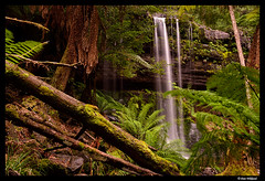 Waterfall and ferns (Dan Wiklund) Tags: longexposure nature forest waterfall nationalpark natural australia tasmania dreamy ferns d800 russellfalls 2016 mtfield