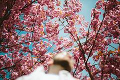 Springtime Leo (.Till) Tags: pink blue portrait sky blur flower tree cherry spring bokeh bloom