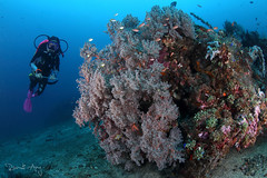 Fan Coral (Randi Ang) Tags: bali coral canon indonesia photography eos underwater angle pyramid wide dive scuba diving fisheye ang 15mm randi 6d amed seafan
