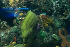 DSC03699 (emmanrog) Tags: peces animales marino acuario
