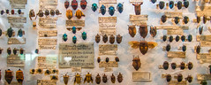 Antique Bug Collection (andryn2006) Tags: england london unitedkingdom insects pins bugs specimens hornimanmuseum