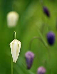 Spring 2016 - 861 LBG (Lostash) Tags: life flowers plants nature gardens spring flora seasons leicesterbotanicalgardens
