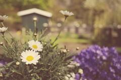Springtime (DM1410) Tags: flowers nature spring dof bokeh sunny panasoniclumix gx1 20mm17