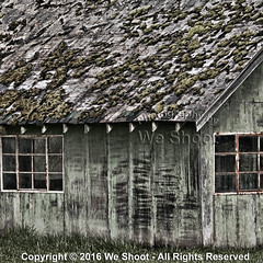 The Moss Is Outstanding (weeviltwin) Tags: wood roof building rot window moss rust decay shed rusty rotten mossy corrosion invasive rotted corrode crumblinginfrastructure weshootcom