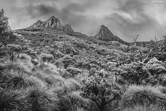Cradle Mountain, TAS (Matt Ha's Photography) Tags: mountain cradle