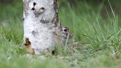 peek-a-boo !!!       :)) (carlo612001) Tags: parcodelticino