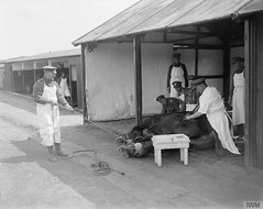 Troops of the Royal Army Veterinary Corps removing a piece of shrapnel from a horse at No. 5 Veterinary Hospital. Note chains around the horse's legs to keep it still. Abbeville 22nd April 1918. [800x635] #HistoryPorn #history #retro http://ift.tt/1WJD5XP (Histolines) Tags: from horses horse history hospital army chains still legs 5 no royal it retro note corps april timeline keep around piece troops 1918 22nd veterinary shrapnel abbeville removing vinatage historyporn histolines 800x635 httpifttt1wjd5xp