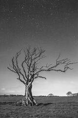 That tree (MistaPea) Tags: trees tree stars nightshot alnwick northumberland astrophotography lone nightsky loner