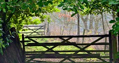 Great Gates (Duane Jones Cheshire1963) Tags: wood green field leaves rural forest fence jones leaf spring warrington woods nikon flickr branch post gates great scene hedge guardian facebook duane glazebury d3100