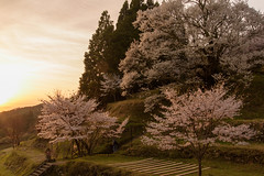 32Butsuryuji Temple (anglo10) Tags: sunset japan cherry temple