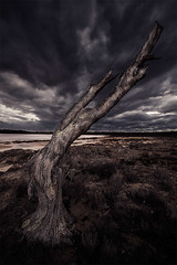 Swirling up to the clouds (Leanne Cole) Tags: clouds landscape photographer photos overcast australia images victoria deadtree environment fineartphotography landscapephotography pinklakes murraysunsetnationalpark environmentalphotography fineartphotographer nikond800 environmentalphotographer leannecole leannecolephotography