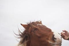 Wild Hearts (Novel Photographie) Tags: va assateague