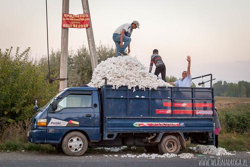 Zbiory bawełny
