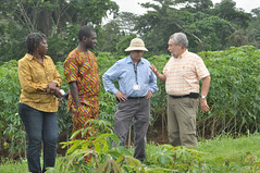 Discussion on new cassava varieties (IITA Image Library) Tags: cassava iita manihotesculenta provitamina