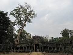 "Angkor: le temple Preah Khan <a style=""margin-left:10px; font-size:0.8em;"" href=""http://www.flickr.com/photos/127723101@N04/24187576442/"" target=""_blank"">@flickr</a>"