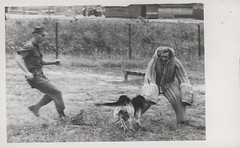 Scout Dog in Attack Demonstration, circa 1968 (Marine Corps Archives & Special Collections) Tags: marine war military police vietnam corps marines battalion