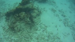 pennekamp_06 (ericvdb) Tags: statepark snorkeling floridakeys keylargo johnpennekamp