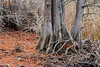 Landscape along Niles Community Park and Alameda Creek Trail (matxutca (cindy)) Tags: california trees colors leaves fremont stump 2016 alamedacreektrail nilescommunitypark ebparksok